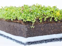 Vegetable covers, sedum, green roofs, green roofs
