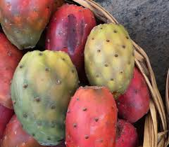 Opuntia ficus indica Mill also known as prickly pear