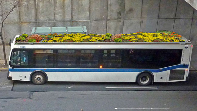 Plant cover on bus