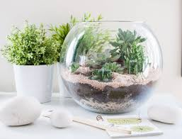 How to make a terrarium or verrine with succulents (use color sand)