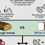 WHITE BREAD VS WHOLE WHEAT