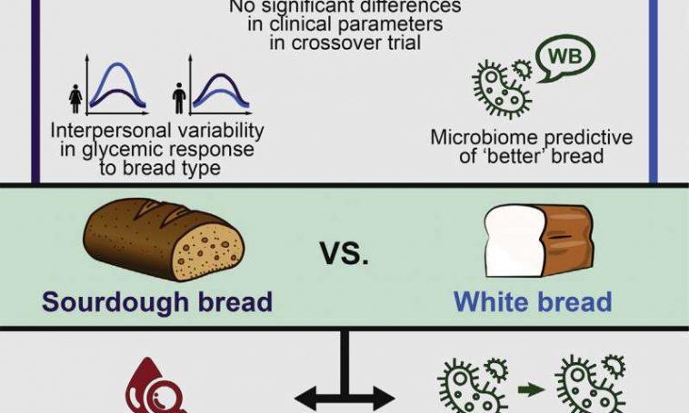 WHITE BREAD VS WHOLE WHEAT