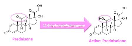 prednisone and prednisolone