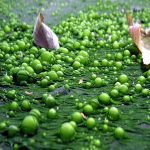 eutrophication effects