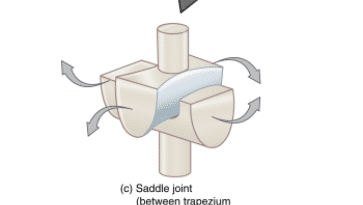 A saddle joint