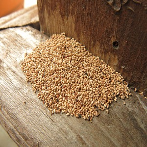 Difference Between Woodworm And Termites Lorecentral
