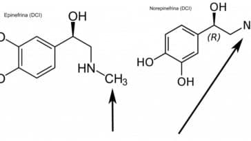 difference between adrenaline and noradrenaline
