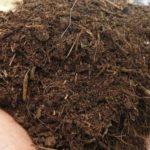 Organic fertiliser in a hand