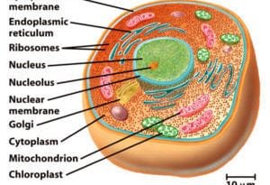 parts of a eukaryotic cell