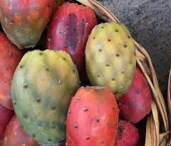 Nopal, Tuna or Prickly Pears