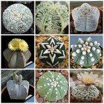 Different cactus Genus Astrophytum