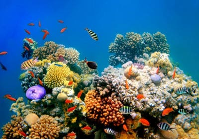 The coral reefs are an example of the relationships that marine biotics possess, coexisting bacteria, phytoplankton, algae, and animals.