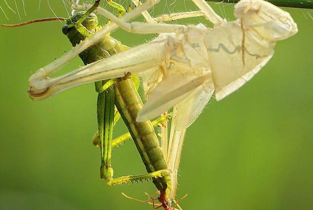 Grasshopper exoskeleton