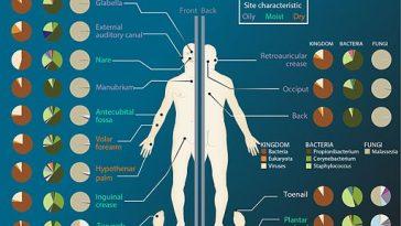Body microbiota